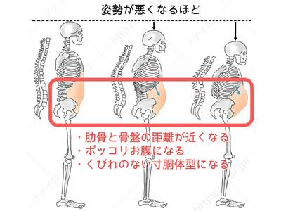 姿勢と骨格の関連 ウエスト くびれ 筋トレ