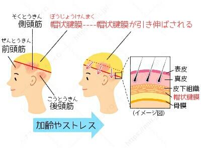 棒状筋膜 頭皮 マッサージ たるみ