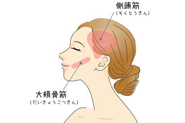 大頬骨筋と側頭筋 顔ヨガ やり方