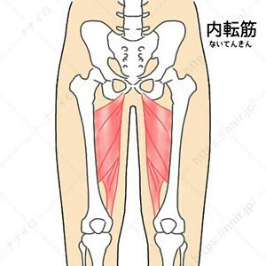 内転筋の位置 足パカ 効果 期間